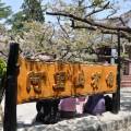 阿里山國家森林遊樂區-阿里山賓館一景1照片