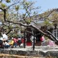 阿里山國家森林遊樂區-阿里山賓館一景2照片