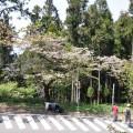 阿里山國家森林遊樂區-阿里山賓館下方照片
