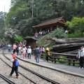 阿里山國家森林遊樂區-神木站(舊阿里山神木所在地)照片