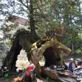 阿里山國家森林遊樂區-三代木照片