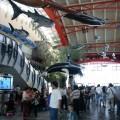 國立海洋生物博物館(海生館)