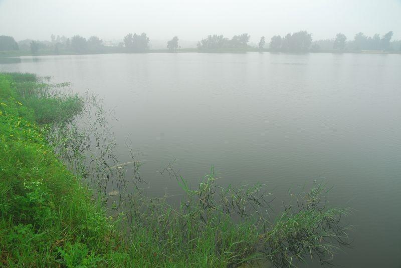 西湖主照片