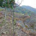 九份二山震災紀念園區-氣爆點(爆發點)6照片