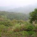 九份二山震災紀念園區-走山處下方山谷照片