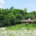 三棧玫瑰谷(又稱娃娃谷)-三棧玫瑰谷(又稱娃娃谷)照片