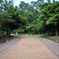 美崙山生態公園照片