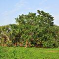 人文公園(環保運動公園)-公園樹木扶疏照片
