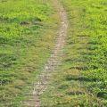 人文公園(環保運動公園)-步道照片
