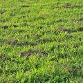 人文公園(環保運動公園)-大片綠草地照片