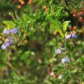 人文公園(環保運動公園)-公園內的植物照片