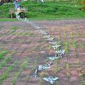 人文公園(環保運動公園)-整理風箏的人照片