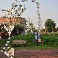 人文公園(環保運動公園)-放風箏3照片