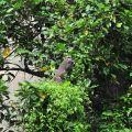 萬年峽谷-沿路偶而會看到野生猴子照片