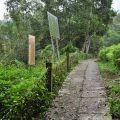 草嶺風景區-往峭壁雄風的峭壁步道照片