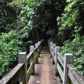 草嶺風景區-茄苳步道2照片