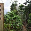 草嶺風景區-茄苳步道1照片