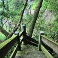 草嶺風景區-往青蛙石的步道1照片