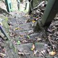 草嶺風景區-往青蛙石的步道2照片