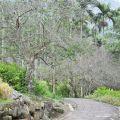 草嶺風景區-蓬萊瀑布步道1照片