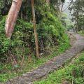 草嶺風景區-蓬萊瀑布步道2照片