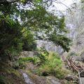 草嶺風景區-蓬萊瀑布步道3照片