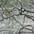 新草嶺潭-潭邊的樹木照片