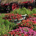 綠盈牧場-牧場內種植的花草照片