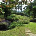 綠盈牧場-園區裡種植有多種花卉照片