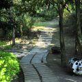 綠盈牧場-園區小徑照片