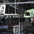 綠盈牧場-乳牛飼養區照片