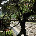 奮起湖火車站-車站旁一景照片
