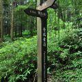 奮瑞步道(奮瑞古道)-奮起湖周邊步道交錯照片