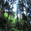 奮瑞步道(奮瑞古道)-沿途隨處可見高聳的大樹照片