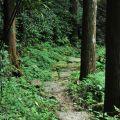 奮瑞步道(奮瑞古道)-步道一景2照片