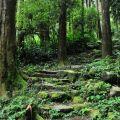 奮瑞步道(奮瑞古道)-步道一景照片