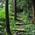 奮瑞步道(奮瑞古道)-古意盎然的步道照片