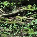奮瑞步道(奮瑞古道)-沿路可見豐富的植物照片