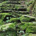 奮瑞步道(奮瑞古道)-沿途盡是具古意的石階組成照片