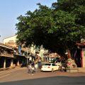 大埔老街-老街上北極殿旁的大榕樹照片