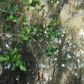 朴子溪出海口-朴子溪出海口照片
