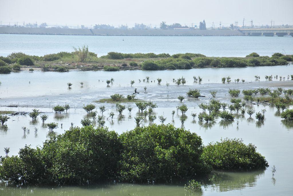 朴子溪出海口主照片