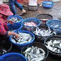 東石漁港(東石漁市)-漁獲販售照片