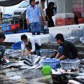 東石漁港(東石漁市)-漁獲處理照片