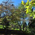 沼平公園-公園一景3照片