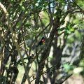 沼平公園-賞鳥照片