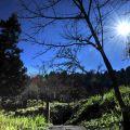 沼平公園-沼平冬陽照片