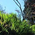 沼平公園-藍天綠地照片