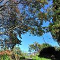 沼平公園-初冬的步道照片