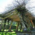 沼平公園-與樹木合一的涼亭照片